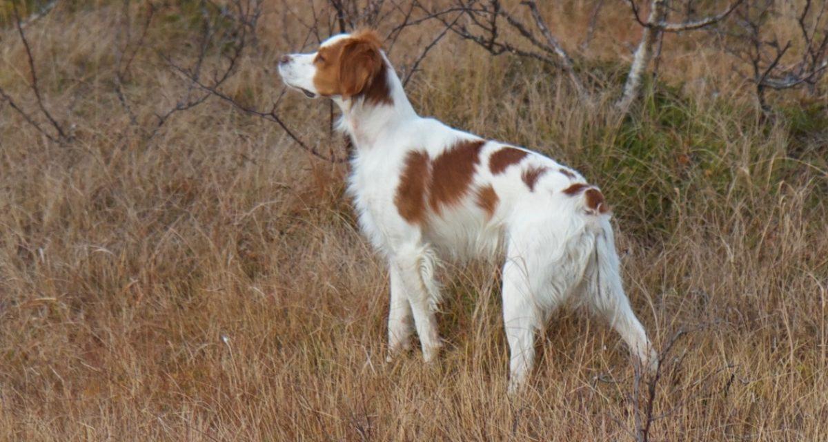 Oversikt over Elitehunder før 19.10.2019