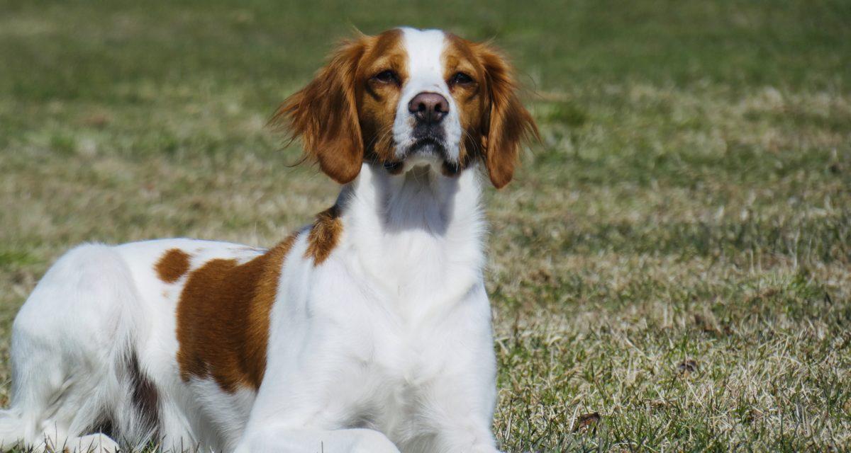 Tromsørypa's Nala ny Elitehund