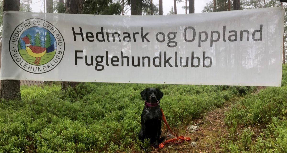 1UK Apport til Kvikksteps D-Maja