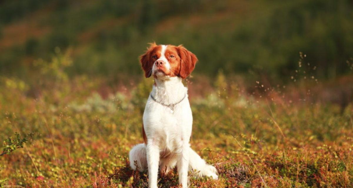 Reisavannet's Iso ny Elitehund