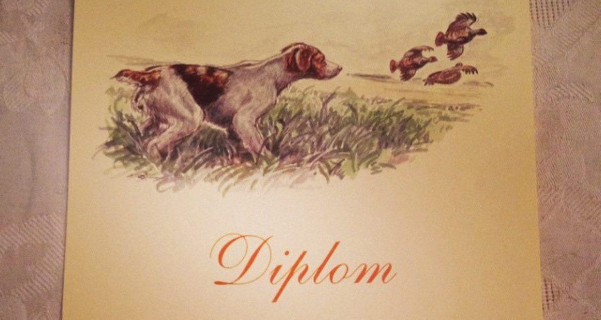 Elitehund Diplom