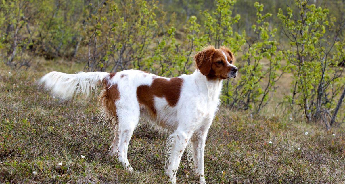 Van't Passant Heart of Chelsea ny elitehund