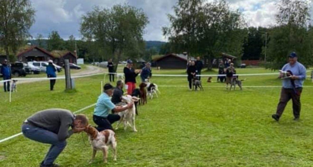 Kamvatnet's Fant vinner av Sølvhunden 2021